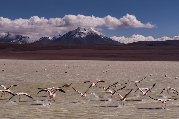 Flamingos on the Salt Flats thumbnail