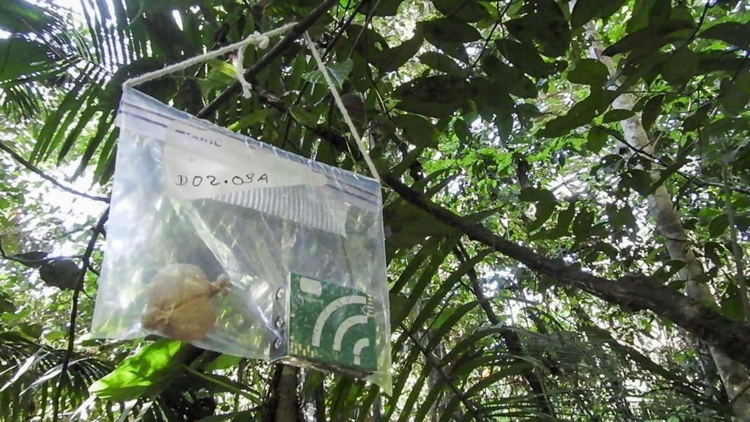 Acoustic recorders are kept inside plastic bags to protect them from the rain