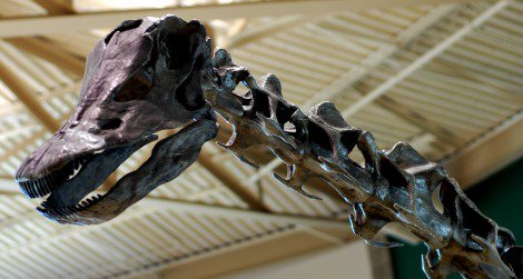 The head of Diplodocus, on a reconstruction at the Utah Field House of Natural History.