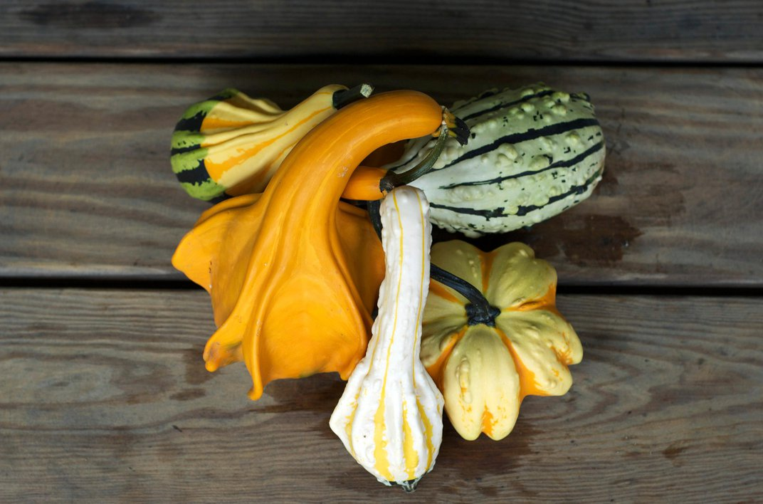 The Science Behind Decorative Gourd Season