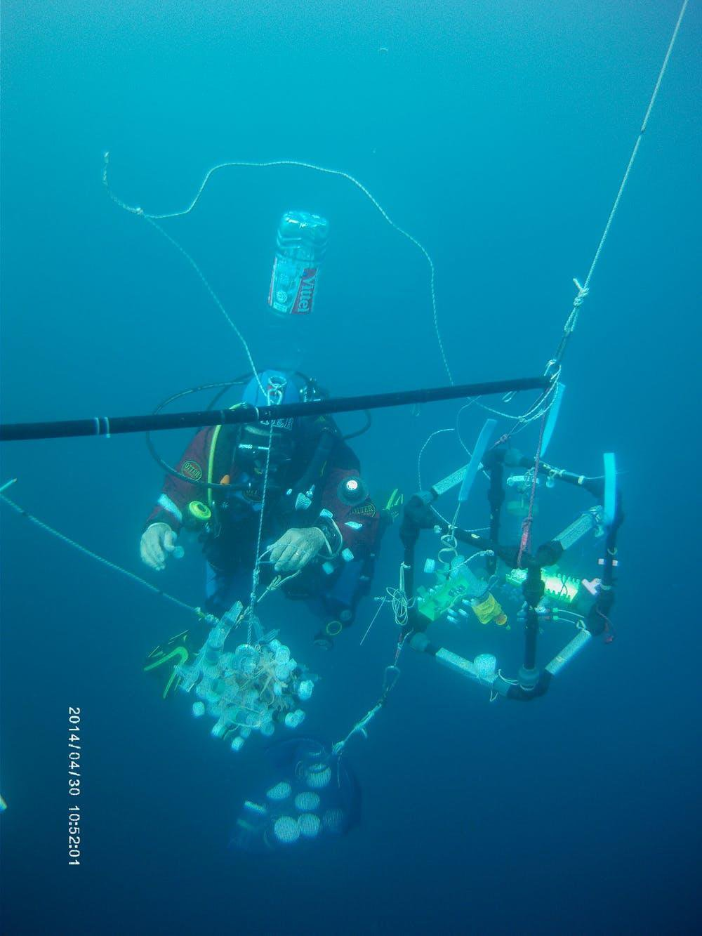 These Strange Ocean Creatures Trap Their Food In a Net of Mucus
