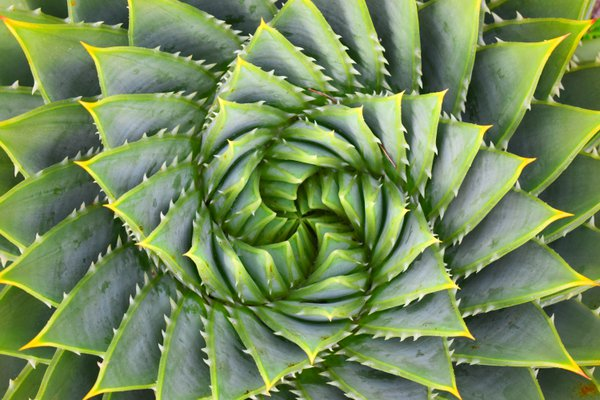 Fractal cactus thumbnail