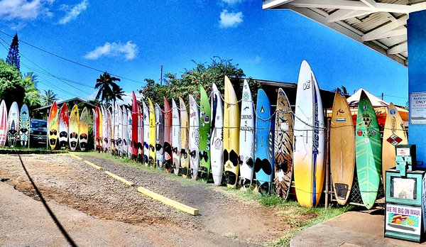 a fence of surfboards thumbnail