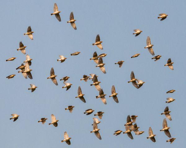 Flying Birds thumbnail