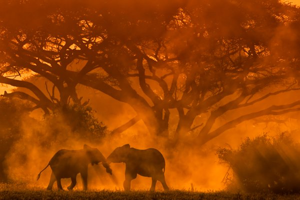 """The Trunks"" in Golden Light, Dust and Shadows... thumbnail"