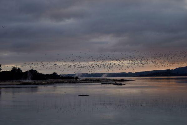thermal Lake in Rotorua NZ thumbnail