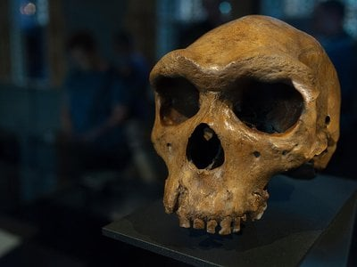 """Human evolution is """"one of the highest hurdles — if not the highest hurdle — to science education in America,"""" says Smithsonian's Rick Potts. Here, an early human fossil found in Broken Hill, Zambia."""