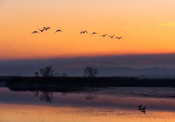Flapping wings at dusk thumbnail