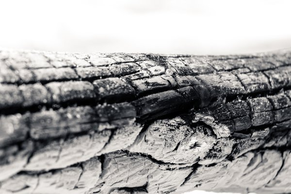 Log burned - Extreme close up shot - B&W thumbnail