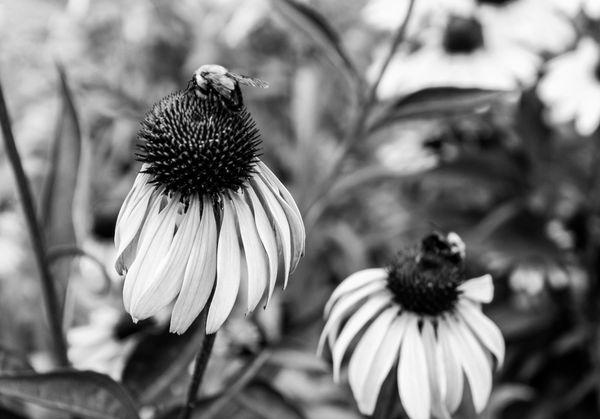 Bees thumbnail