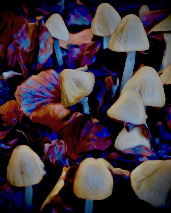 Magical Mushrooms thumbnail