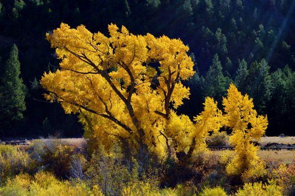 Rio Grande National Forest Colorado in October thumbnail