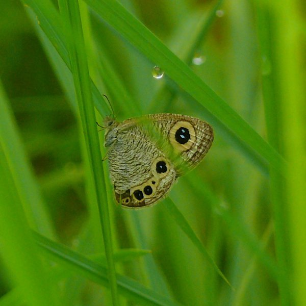 The Dew Drop and the Butterfly thumbnail