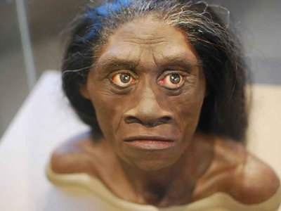 In a reconstruction, by artist John Gurche, the Smithsonian's Natural History Museum displays what the Hobbit would have looked like in the Hall of Human Origins.