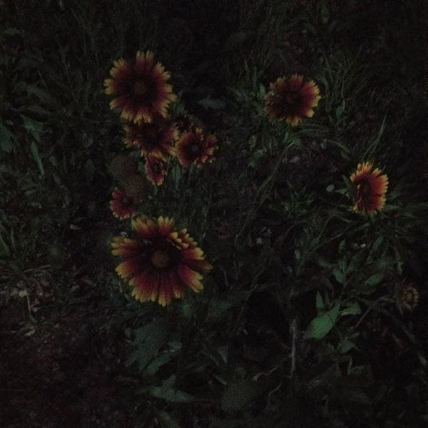 夜晚绽放的花朵 thumbnail