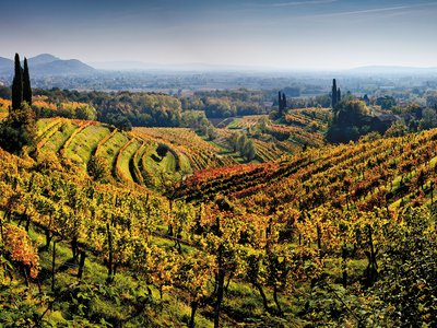 Friuli-Venezia Giulia's vineyards benefit from the breezy, sunny microclimate created by their equidistance from the Austrian Alps to the north and the Adriatic Sea to the south.