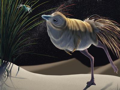 An illustration of Shuvuuia deserti shows the long-legged dinosaur hunting an insect at night.