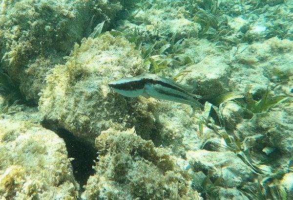 Octopus in Aruba 6 thumbnail
