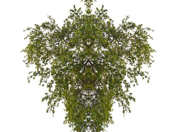 Skull Tree thumbnail