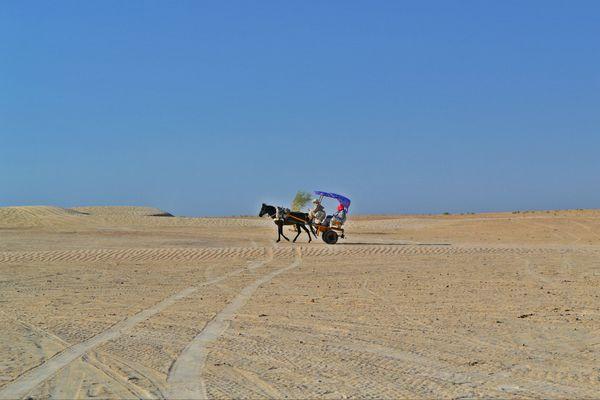 Among the desert thumbnail