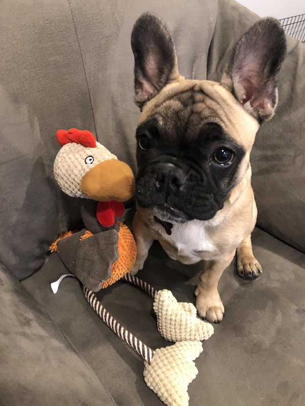 Charlie got his toy for Thanksgiving thumbnail