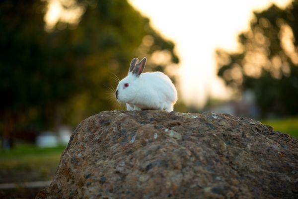 A Rabbit's World thumbnail