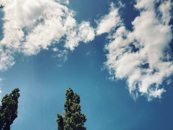 High crimean poplars in Feodosiya thumbnail