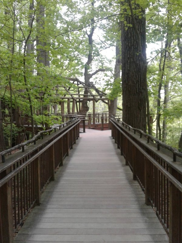 A Bridge Path to Nature thumbnail