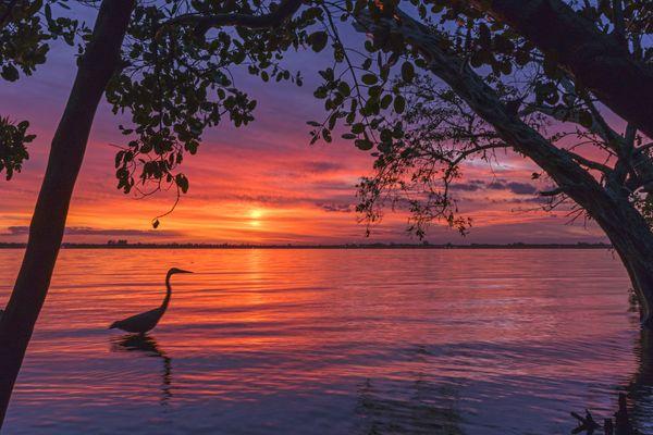 A Heron at Sunset thumbnail