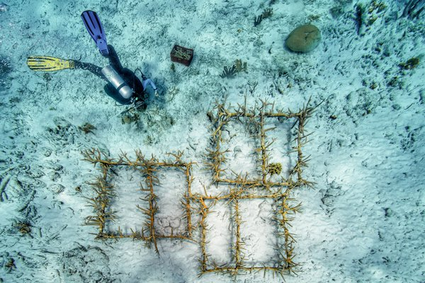 Coral restoration project: the outplanting thumbnail