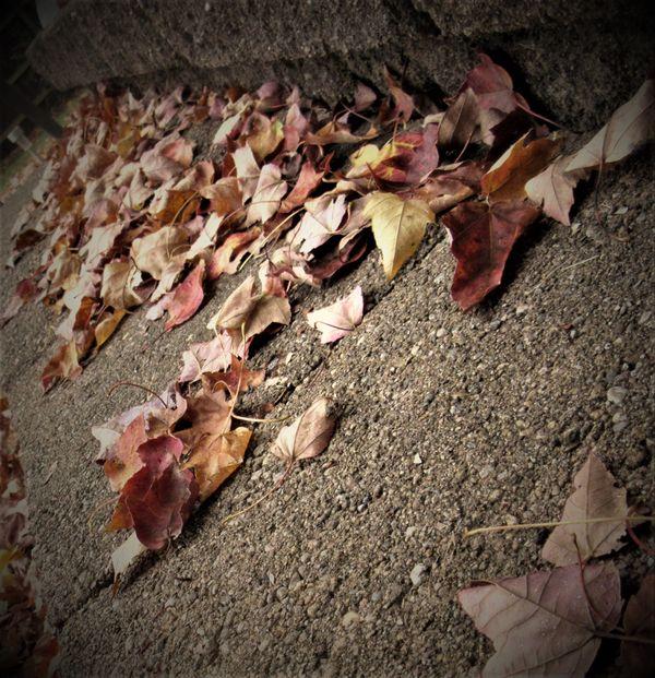 Stepping into Fall thumbnail