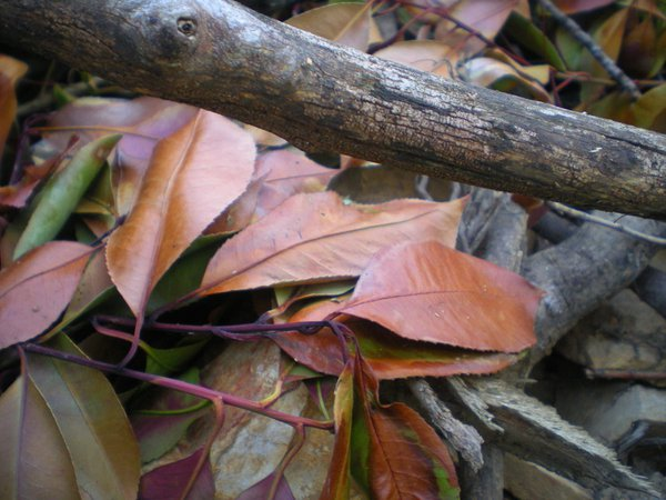 Pile of leaves and sticks thumbnail