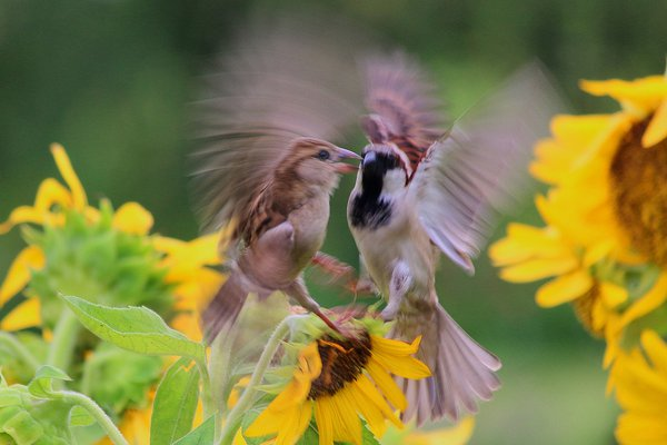 ANGRY BIRD thumbnail