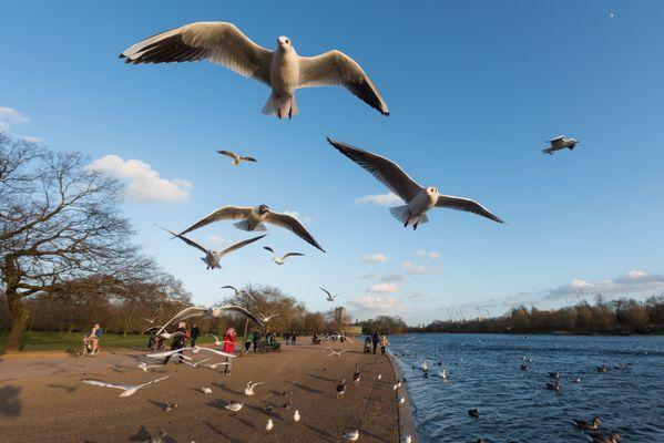 Hyde Park thumbnail