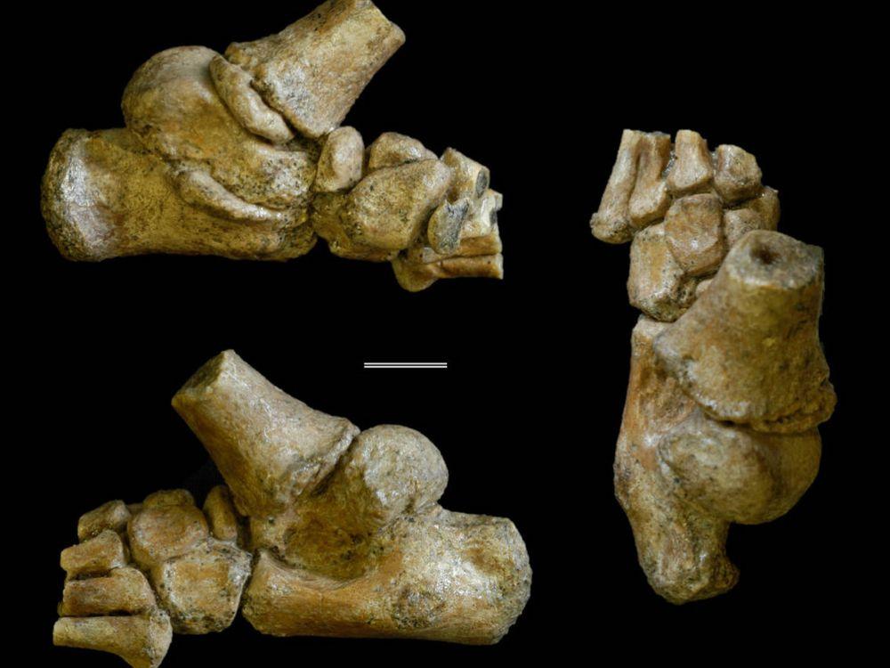 Selam's Foot