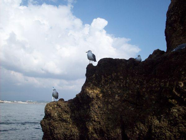 Seagulls in the Algarve. thumbnail