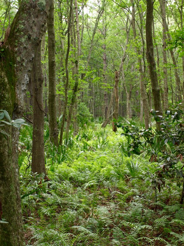 Fern Forest thumbnail
