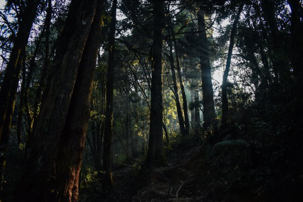Old Growth Forest and The Sunbeams thumbnail