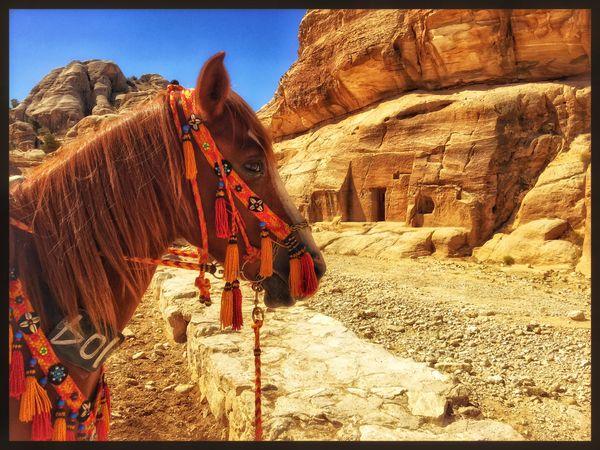 Horse at Petra. thumbnail