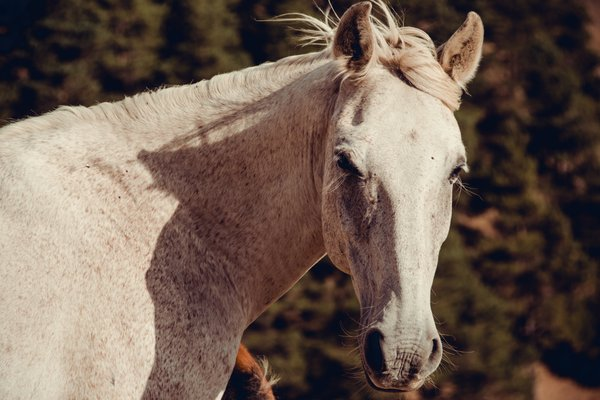 Portrait of a horse with long eyelashes. thumbnail