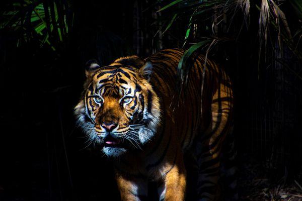 King of the Jungle thumbnail