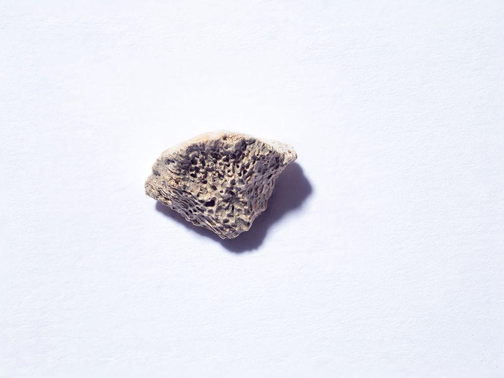 Dog Bone Fragment
