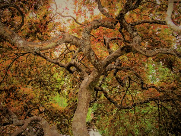 Enchanted Colorful Forest Tree thumbnail