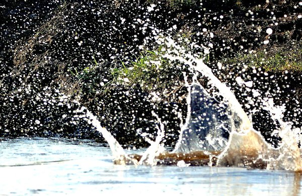 Crocodile takes a dive on the Zambezi River thumbnail