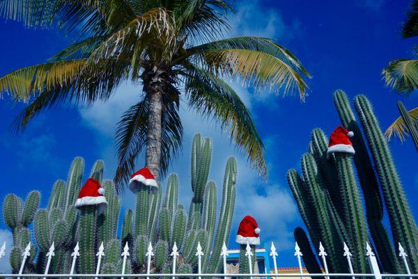 Christmas Bonaire Style - Cacti with little Santa hats thumbnail