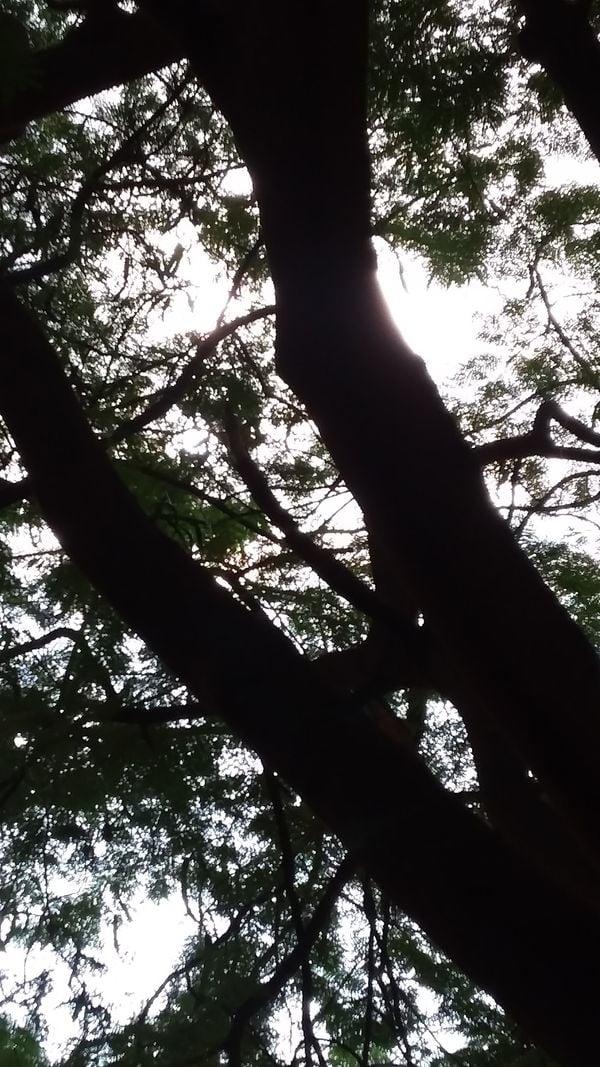 Trees in Hyderabad, India thumbnail
