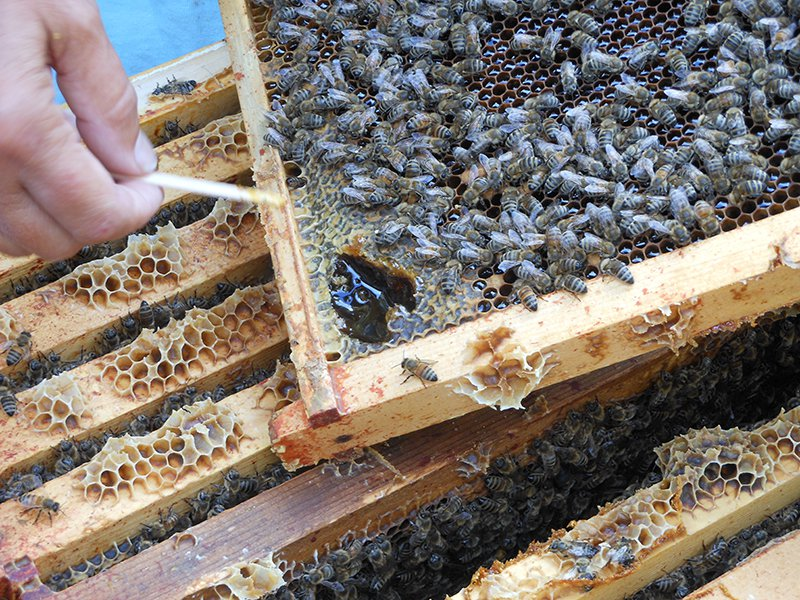 Can Honeybees Monitor Pollution?