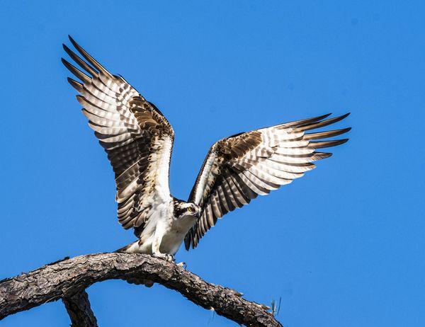 Freedom - ©Frances Quinlivan - Nikon D750 thumbnail