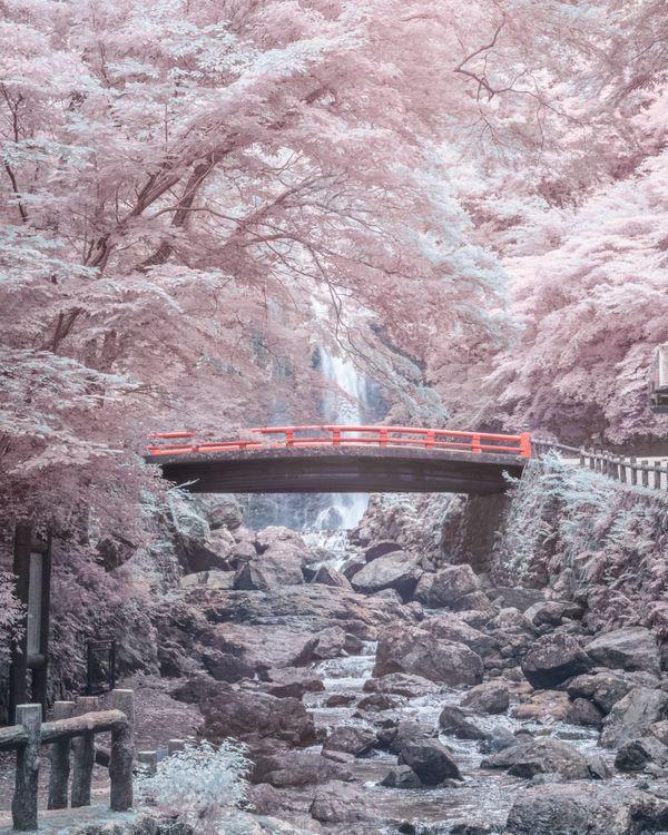 Japan Osaka Minoh waterfall full spectrum pink sakura landscape thumbnail