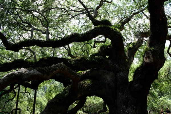 An Angel Oak View thumbnail